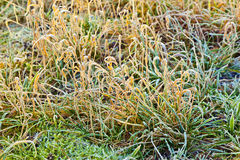 Frozen grass at the meadow Stock Images
