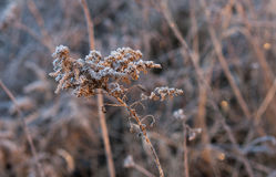 Frozen grass in the morning sun Stock Photo