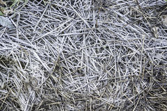 Frozen grass in nature Stock Images