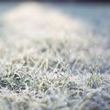 Frozen grass. Nature in winter. Royalty Free Stock Images
