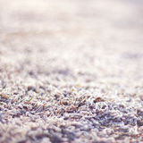 Frozen grass. Nature in winter. Royalty Free Stock Image