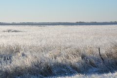 Frozen grass at the ocean Stock Image