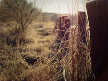 Frozen grass and an old fence Royalty Free Stock Photo