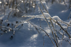 Frozen Grass. After a rain all night and then turning to snow everything was frozen Royalty Free Stock Images