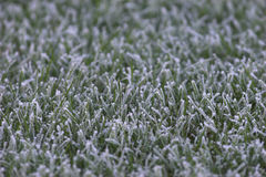 Frozen grass section Stock Photography