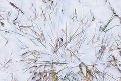 Frozen grass Royalty Free Stock Photo