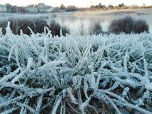 Frozen Grass Stock Image