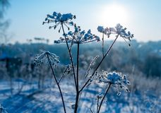 Frozen grass in snow Stock Photography