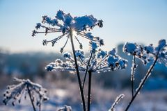 Frozen grass in snow Stock Photo
