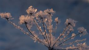 Frozen grass in the snowflakes on a winter afternoon at sunset stock photography