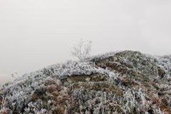 Frozen grass with stone on mountain hill on fog Stock Photos