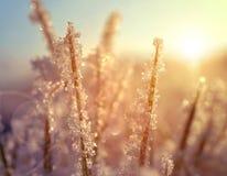 Frozen grass at sunrise close up. Stock Photos