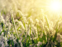 Frozen grass at sunrise close up Royalty Free Stock Photo