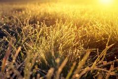 Frozen grass at sunrise Stock Photos