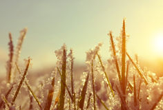 Frozen grass at sunrise close up. Stock Image