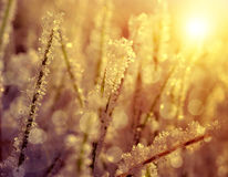 Frozen grass at sunrise close up. Royalty Free Stock Photos