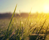 Frozen grass at sunrise close up. Stock Photography
