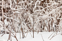 Frozen grass in sunshine Royalty Free Stock Photos