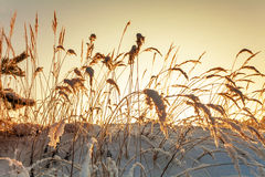 Frozen grass in sunshine Stock Photo