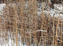 Frozen grass in sunshine Royalty Free Stock Photo