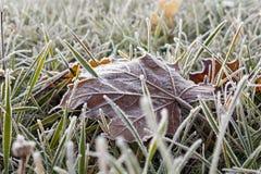 Frozen grass Stock Photos