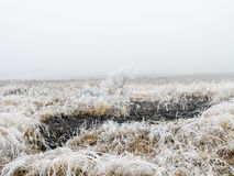 Frozen grass and tree in winter Stock Images