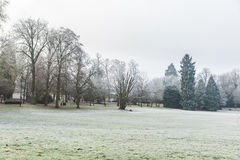 Frozen grass and trees at park in Luxembourg Royalty Free Stock Photos