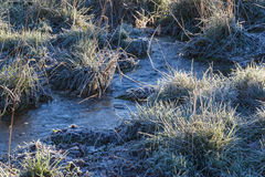 Frozen grass turf Royalty Free Stock Photo