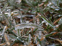 Frozen grass. In winter caused by freezing rain Royalty Free Stock Photos