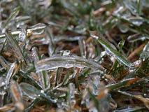 Frozen grass Royalty Free Stock Photos