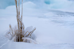 Frozen grass in winter Stock Photos