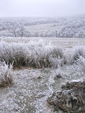 Frozen grass in a winter landscape. On a meadow on a cold day with trees in the background and fog Stock Images