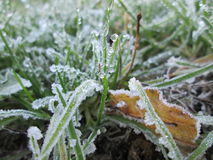 Frozen grass. Winter picture with frozen nature Stock Photos