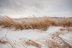 Frozen grass. In winter after rainy weather Stock Photos