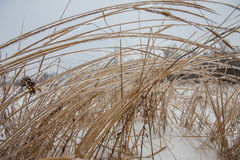 Frozen grass. In winter after rainy weather Royalty Free Stock Photos