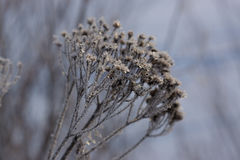 Frozen grass on winter Royalty Free Stock Photography