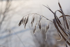 Frozen grass on winter Royalty Free Stock Photo