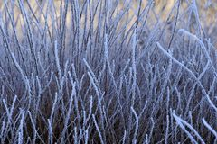 Frozen grasses, winter Stock Photography