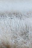 Frozen grassland landscape. Near by Wesel in Germany stock photos