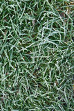 The frozen green grass Royalty Free Stock Image