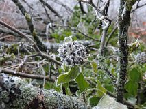 Frozen green leaves with tiny ice crystals in the nature. Taken near Karlsruhe. royalty free stock photography