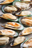 Frozen green mussels Royalty Free Stock Image