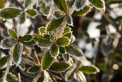 Frozen green plant Stock Image