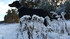 Frozen ground. And dog in background Stock Photo