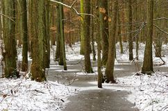 Frozen ground in the forest. Frozen ground in a forest. Siek near Hamburg, Germany royalty free stock photography