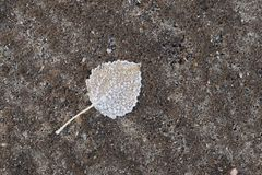 Frozen ground and leaf Stock Images