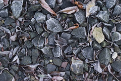 Frozen ground Stock Images