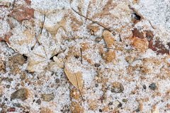 Frozen ground with snow. And leaf in winter Stock Image