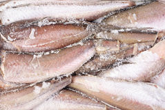 Frozen hake fish as food background Royalty Free Stock Photos