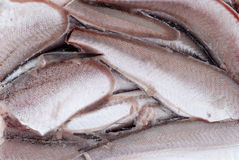 Frozen hake fish Royalty Free Stock Photos
